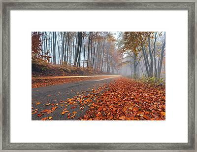 Lightning In The Forest Framed Print by Evgeni Dinev