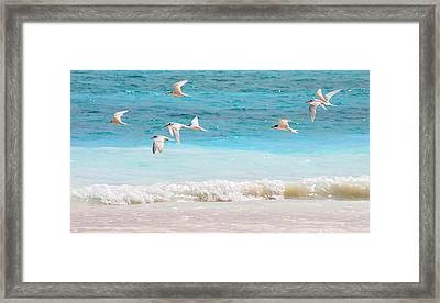 Like Birds In The Air Framed Print by Jenny Rainbow