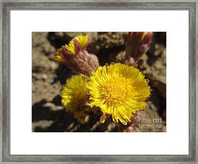Like Flowers In A Desert Framed Print by Martin Howard