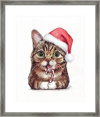 Lil Bub Cat In Santa Hat Framed Print by Olga Shvartsur