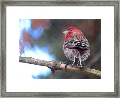Lil' Strawberry Framed Print by  The Art Of Marilyn Ridoutt-Greene