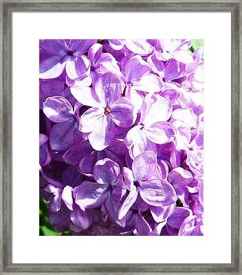 Lilac Framed Print by Irina Sztukowski