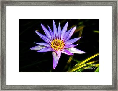 Lilac Lily Framed Print by Mariola Bitner