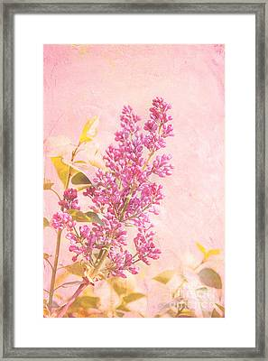 Lilacs In Pink Framed Print by Kay Pickens