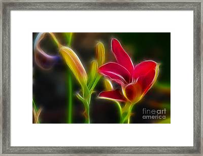 Lilies-6340-fractal Framed Print by Gary Gingrich Galleries
