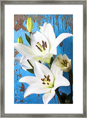 Lilies Against Blue Wall Framed Print by Garry Gay