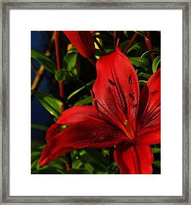 Lilies By The Water Framed Print by Randy Hall