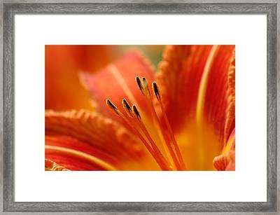 Lilies Heart Framed Print by Edward Loesch