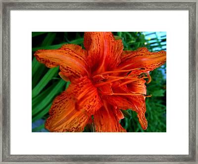 Lillie 4 Framed Print by Mark Malitz