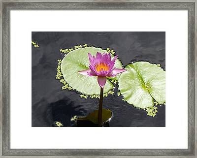 Lilly Lake Framed Print by Carey Chen