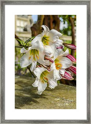 Lilly The Pink Framed Print by Darren Wilkes