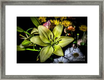 Lily Framed Print by Adrian Evans