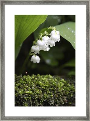 Lily Of The Valley Framed Print by Jane Wheeler