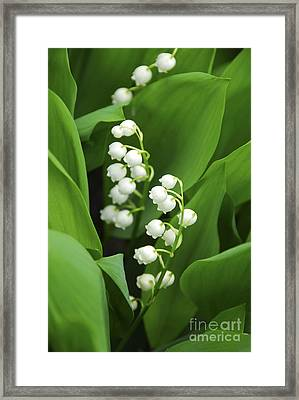 Lily-of-the-valley  Framed Print by Elena Elisseeva