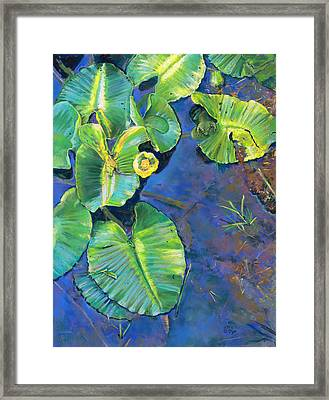 Lily Pads Framed Print by Nick Payne
