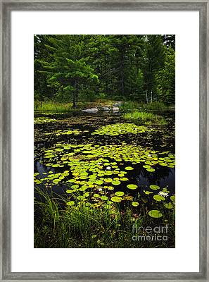 Lily Pads On Lake Framed Print by Elena Elisseeva