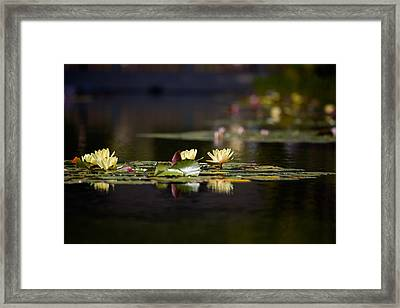 Lily Pond Framed Print by Peter Tellone