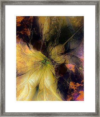 Lily Pond Reflections Framed Print by Amanda Moore