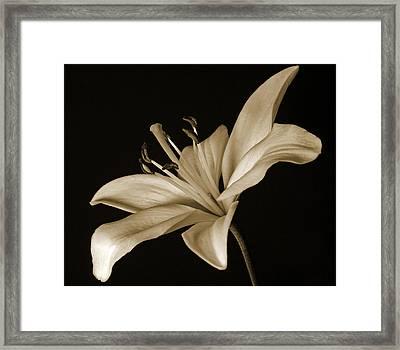 Lily Framed Print by Sandy Keeton