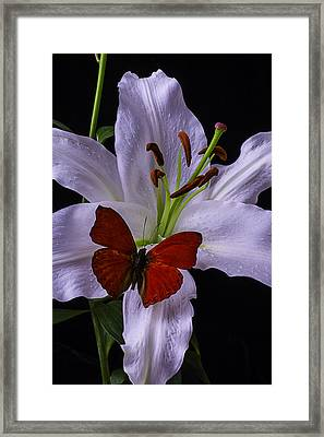 Lily With Red Butterfly Framed Print by Garry Gay