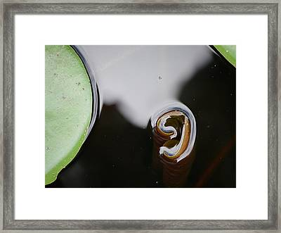 Lily's Reflection Framed Print by Jane Ford