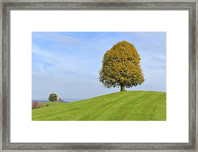 Lime Tree Zug Switzerland Framed Print by Thomas Marent