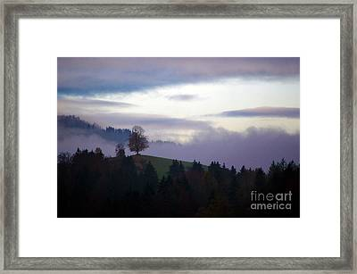 Linden Berry Tree And Fog Framed Print by Susanne Van Hulst