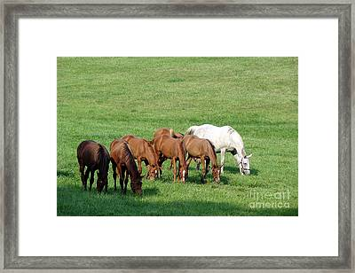 Line Feeding Framed Print by Olivier Le Queinec