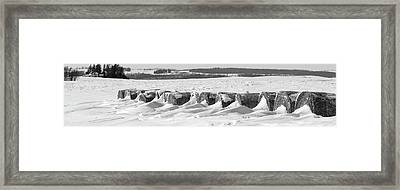 Line Of Bales Drifted With Snow Framed Print by Panoramic Images
