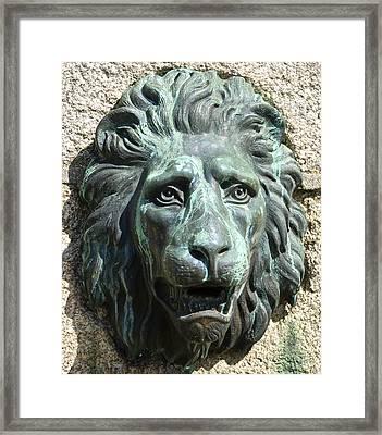Lion King Framed Print by Charlie Brock