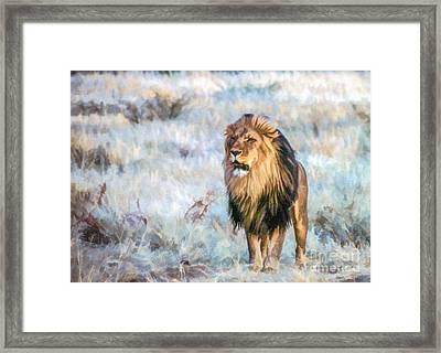 Handsome Lion Framed Print by Liz Leyden