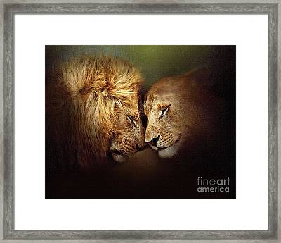 Lion Love Framed Print by Robert Foster