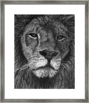Lion Of Judah Framed Print by Bobby Shaw