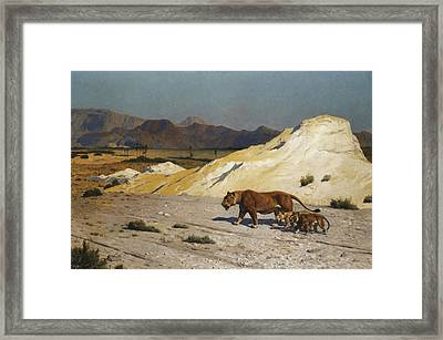 Lioness And Cubs Framed Print by Jean Leon Gerome