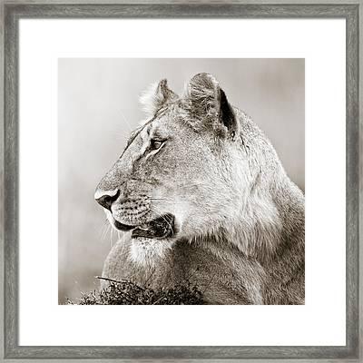 Lioness Masai Mara Kenya Framed Print by Regina Mueller