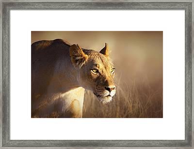 Lioness Portrait-1 Framed Print by Johan Swanepoel