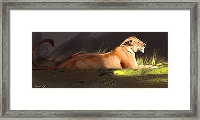 Lioness Sketch Framed Print by Aaron Blaise