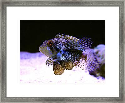 Lionfish Dendriochrius Barberi Framed Print by Karon Melillo DeVega