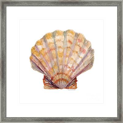 Lion's Paw Shell Framed Print by Amy Kirkpatrick
