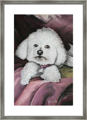 Lisa Bichon Pastel Framed Print by Melinda Saminski