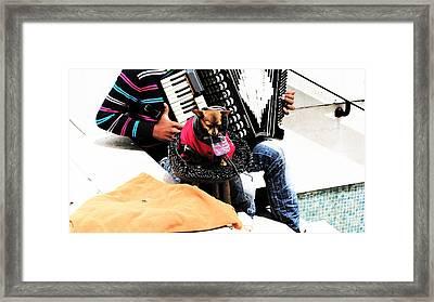 Lisbona Dog Framed Print by Alice Gardoni