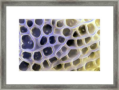 Lisianthus Pollen Framed Print by Louise Hughes