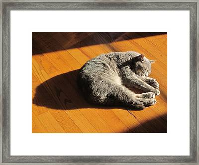 Lit Lounging Lucy Framed Print by Guy Ricketts