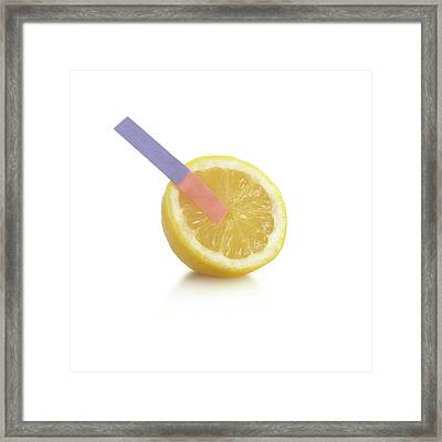 Litmus Paper Test On A Lemon Framed Print by Science Photo Library