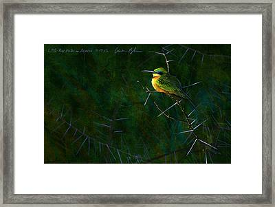 Little Bee Eater Framed Print by Aaron Blaise
