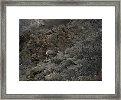 Little Bighorn Framed Print by Ernie Echols