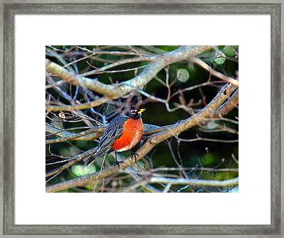 Little Bird Framed Print by Carolyn Ricks