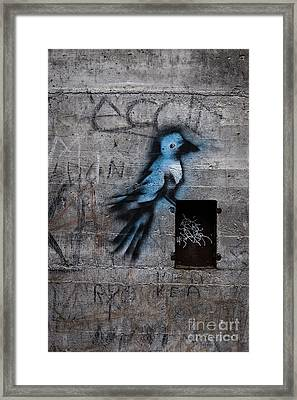 Little Blue Bird Graffiti Framed Print by Edward Fielding