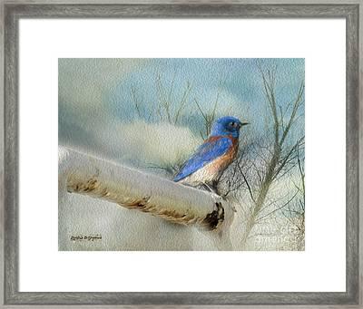 Little Blue Bird Framed Print by Rhonda Strickland