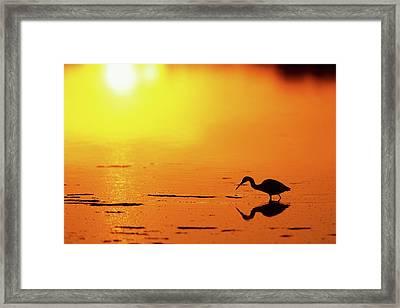 Little Blue Heron (egretta Caerulea Framed Print by Richard and Susan Day